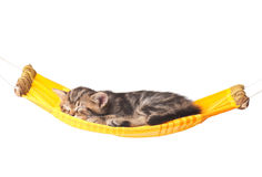 Cute kitten. Asleep kitten on a hammock made of cloth isolated on white background royalty free stock photo