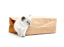 Cute kitten in a bag Stock Images
