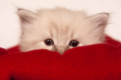 Cute kitten in basket Stock Photography