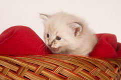 Cute kitten in basket Royalty Free Stock Photo