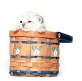 Cute kitten in a basket Royalty Free Stock Photography