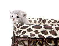 Cute kitten in a basket Royalty Free Stock Photo