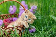 Cute kitten in a basket Stock Photos