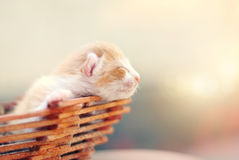 Cute Kitten in the Basket in Summer Sunshine. Little Cat - Pets Care Concept royalty free stock images