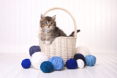 Cute Kitten in a Basket With Yarn on White Stock Images