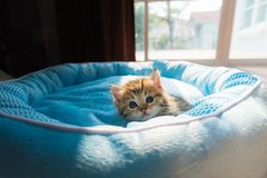 Cute kitten on bed Royalty Free Stock Image