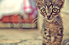 Cute kitten with big eyes - Stock Image Stock Photos