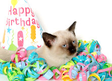 Cute kitten and birthday party decorations Royalty Free Stock Image