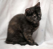 Cute kitten black with ginger Royalty Free Stock Image