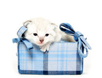 Cute kitten in blue basket Stock Photography