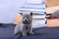 Cute kitten and books Royalty Free Stock Image