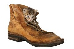 Cute Kitten in Boot Stock Images
