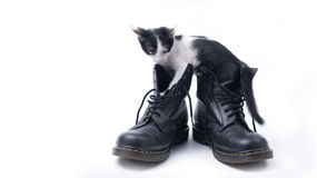 Cute kitten in the boots isolated Stock Photos