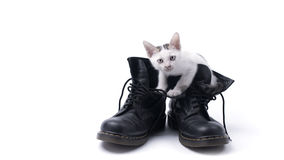 Cute kitten in the boots isolated Royalty Free Stock Photography
