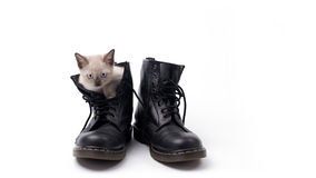 Cute kitten in boots isolated on white Stock Photo