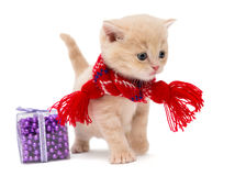 Cute kitten breeds British. In a red scarf, isolated on white Royalty Free Stock Photography