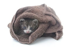Cute kitten in brown towel. Isolated on white Royalty Free Stock Photos