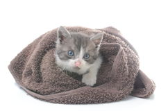 Cute kitten in brown towel. Isolated on white Royalty Free Stock Images
