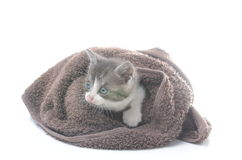 Cute kitten in brown towel. Isolated on white Stock Photo