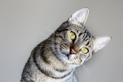 The Cute kitten cat. The cute cat, felines. In the house cat stock photos