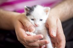 Cute kitten cat stock photography
