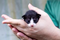 Cute kitten cat royalty free stock photography