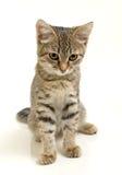 Cute kitten. Stock Photo