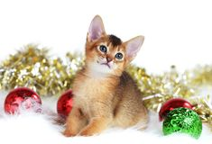 Cute kitten with christmas balls Stock Images