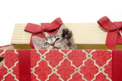 Cute kitten in Christmas basket Stock Images
