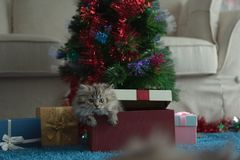Cute kitten in christmas royalty free stock photo