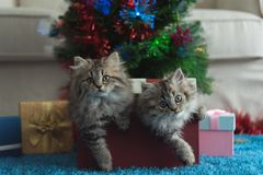 Cute kitten in christmas royalty free stock photography