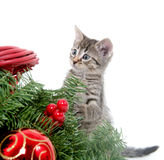 Cute kitten and Christmas decorations Royalty Free Stock Images