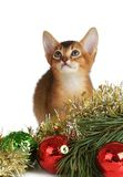 Cute kitten with christmas tree and balls Royalty Free Stock Image