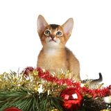 Cute kitten with christmas tree and balls Stock Photography