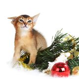 Cute kitten with christmas tree and balls Stock Image