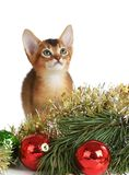 Cute kitten with christmas tree and balls Royalty Free Stock Photography