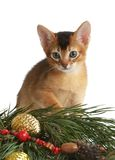 Cute kitten with christmas tree and balls Stock Photo