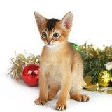 Cute kitten with christmas tree and balls Stock Images