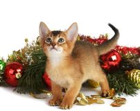 Cute kitten with christmas tree and balls Royalty Free Stock Photos