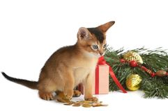 Cute kitten with christmas tree and gift box Royalty Free Stock Photos