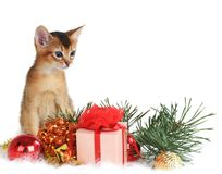 Cute kitten with christmas tree and gift box Stock Photography