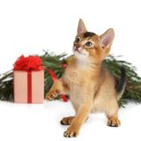 Cute kitten with christmas tree and gift box Stock Photo