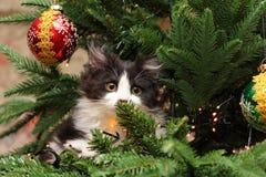 Cute Kitten Climbing on a Christmas Tree