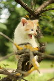 Cute kitten climbing tree and meowing funny Royalty Free Stock Photo
