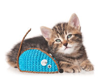 Cute kitten. With colored toy mouse isolated on white background Stock Image