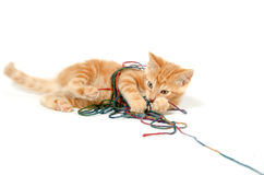 Cute kitten and colorful string Stock Photography