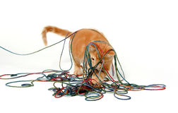 Cute kitten and colorful string Royalty Free Stock Photography