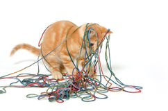 Cute kitten and colorful string Stock Image