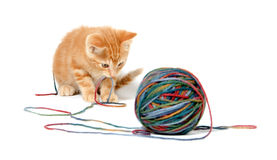Cute kitten and colorful string Stock Photo