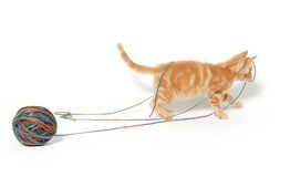 Cute kitten and colorful string Royalty Free Stock Photo